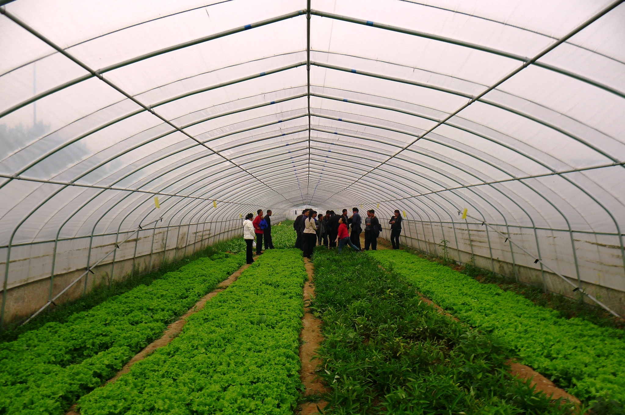 Linking Farm to Supermarket in China