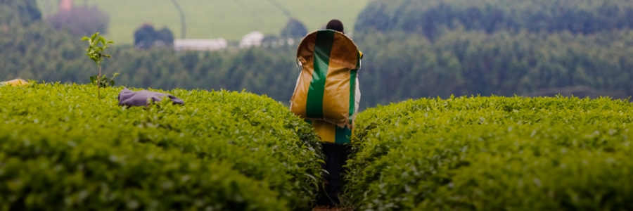 Empowering Women in Kenya's Tea Sector: Adapting HERproject to the Smallholder Farm Context