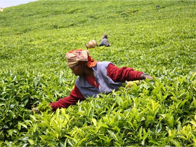 The Opportunity to Empower Women through Investments in East Africa's Agriculture Supply Chain