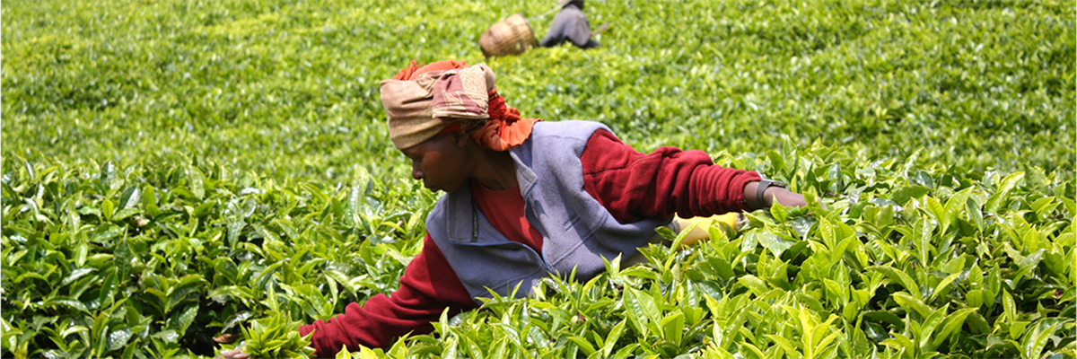 Food Beverage And Agriculture: The Opportunity to Empower Women through Investments in East Africa's Agriculture Supply Chain